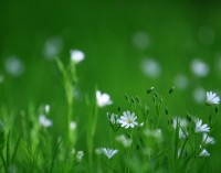 Suffer from hayfever; try some allergy free options for your garden!