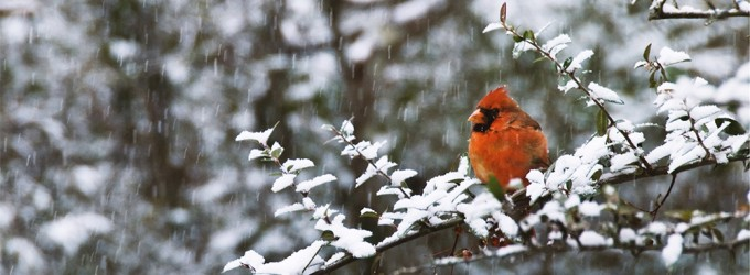 4 Things You Can Do To Prepare Your Garden For Winter Wildlife