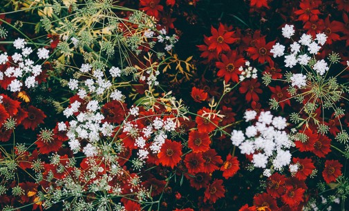 Nurture Your Christmas Plants