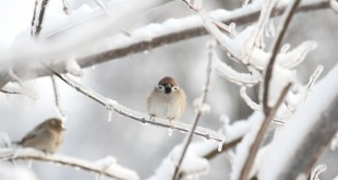 winter wildlife