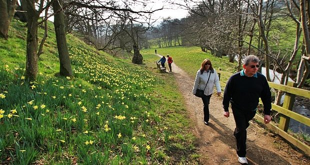 Daffodil valley