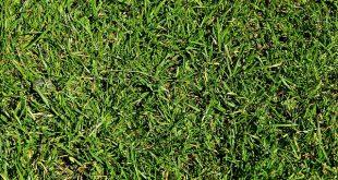 improve lawns