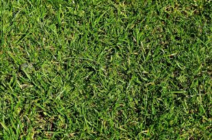improve lawns