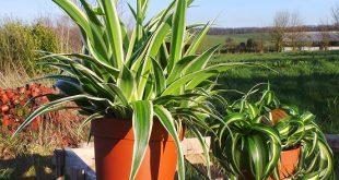 non-toxic plants