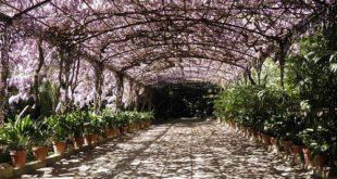 Gardeners Club