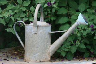 gardening in drought