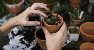 environmental gardening
