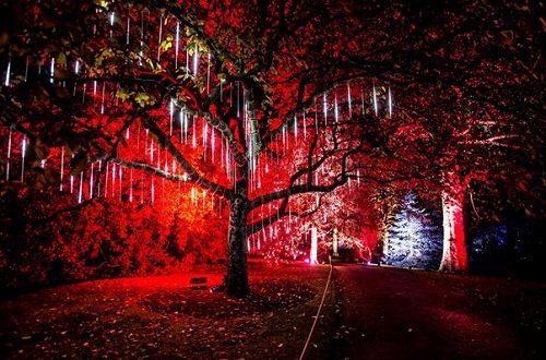 Christmas Gardens